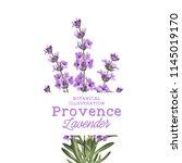 the lavender elegant card.... | Shutterstock .eps vector #1145019170