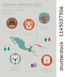 dogs by country of origin.... | Shutterstock .eps vector #1145037506