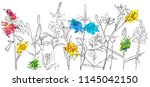 vector drawing flowers  floral... | Shutterstock .eps vector #1145042150