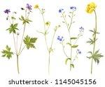 watercolor drawing wild flowers ... | Shutterstock . vector #1145045156