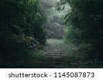 A Magical Forest Path In Dim...