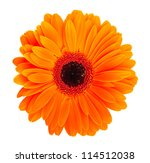 Single Orange Gerbera Flower...