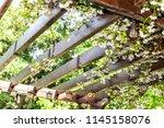 closeup of patio outdoor spring ... | Shutterstock . vector #1145158076