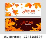 set of two autumn leaves... | Shutterstock .eps vector #1145168879