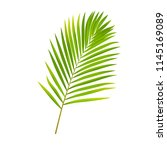 vector green palm leaf isolated ... | Shutterstock .eps vector #1145169089