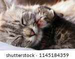 Stock photo mother cat and her newborn kitten 1145184359