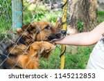 outddor homeless animal shelter.... | Shutterstock . vector #1145212853