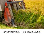 Farmers Harvesting Organic...