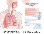 3d vector of the human... | Shutterstock .eps vector #1145296379