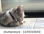 Portrait Cat Licking Fresh...
