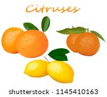 a set of citrus fruits on a... | Shutterstock . vector #1145410163