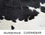 close up on black and white cow ... | Shutterstock . vector #1145440649