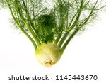 fresh fennel isolated on a... | Shutterstock . vector #1145443670