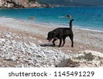 black labrador on the...   Shutterstock . vector #1145491229