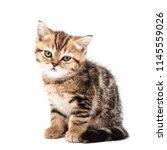 kitten isolated on a white... | Shutterstock . vector #1145559026