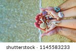 seashells and sand  seashells... | Shutterstock . vector #1145583233