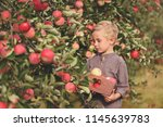 boy worker in the apple orchard.... | Shutterstock . vector #1145639783