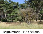 old rusty metal gate beside... | Shutterstock . vector #1145701586