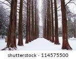 Row Of Pine Trees At Nami...