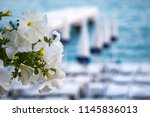 blurred mediterranean sea with... | Shutterstock . vector #1145836013