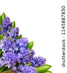 bouquet of blue hyacinth... | Shutterstock . vector #1145887850