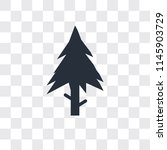 spruce vector icon isolated on... | Shutterstock .eps vector #1145903729
