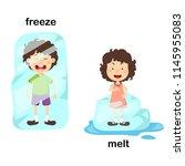 opposite freeze and melt vector ... | Shutterstock .eps vector #1145955083