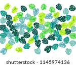 philodendron or monstera plant. ... | Shutterstock .eps vector #1145974136
