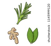 Herb And Spices Cartoon Icons...