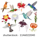 hummingbird vector tropical... | Shutterstock .eps vector #1146022040