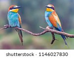 pair of european bee eaters | Shutterstock . vector #1146027830