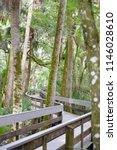 wooden path through the park | Shutterstock . vector #1146028610