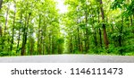 asphalt road and green tree in... | Shutterstock . vector #1146111473
