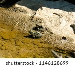 stony bottom and two frogs on... | Shutterstock . vector #1146128699