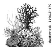 hand drawn coral reef. vector... | Shutterstock .eps vector #1146154670
