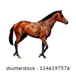 young frisky stallion in a red... | Shutterstock . vector #1146197576
