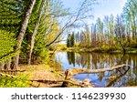 spring forest river landscape.... | Shutterstock . vector #1146239930
