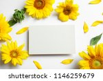 beautiful bright sunflowers and ... | Shutterstock . vector #1146259679