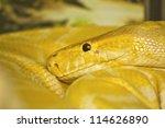 close up of snake head  thai... | Shutterstock . vector #114626890