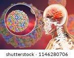 west nile virus wnv... | Shutterstock . vector #1146280706