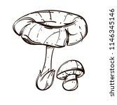 forest mushrooms. outline...   Shutterstock .eps vector #1146345146