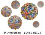 west nile virus wnv isolated on ... | Shutterstock . vector #1146350126