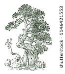 pine tree or evergreen juniper  ... | Shutterstock .eps vector #1146421553