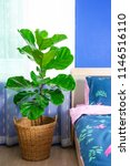 fiddle leaf fig tree in the... | Shutterstock . vector #1146516110