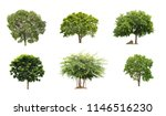 Collection Beautiful Isolated Trees White - Fine Art prints