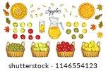 set of apples  apple slices ... | Shutterstock .eps vector #1146554123