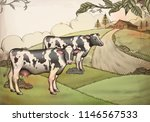 engraving style dairy cattle... | Shutterstock .eps vector #1146567533