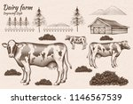 engraving style dairy cattle... | Shutterstock .eps vector #1146567539