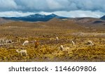 dramatic landscape in the andes ... | Shutterstock . vector #1146609806