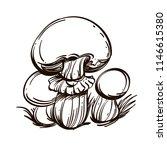 caesar mushroom. outline vector ... | Shutterstock .eps vector #1146615380